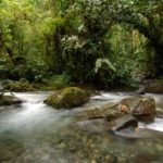 River Bellavista Lodge - Cloudforest Lodges