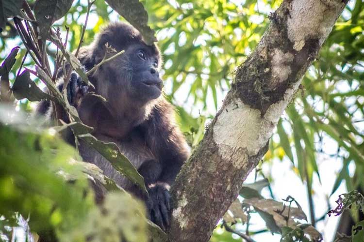 Monkeys Pacoche Lodge - Lodges Ecuador