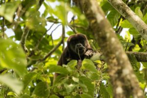Monkey Pacoche Lodge - Lodges Ecuador